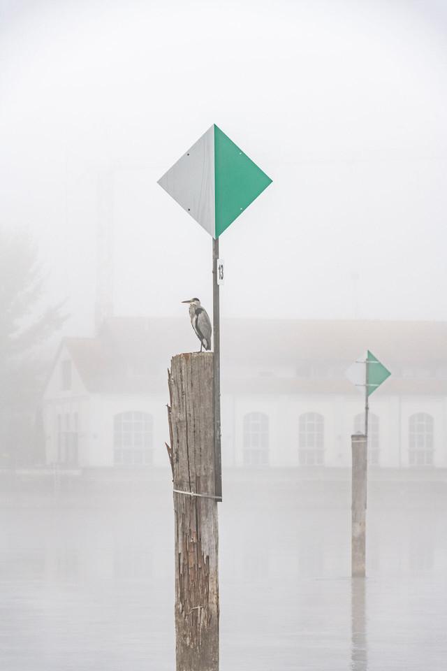Konstanz-Seerhein-Landschaft-Nebel-Ried-Stromeyer-Bleiche-Graureiher-Detail_Herbst_Copyright_MTK-Dagmar-Schwelle